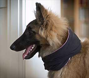versteh ich gar nicht so ein schöner hund